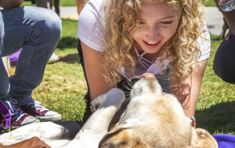 Destress Fest, Dog Therapy Day preps students for finals week