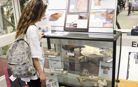 Hospitality major, Madison McIntyre, observes the 80,000-year-old fossils on Feb. 24, at the Luria Library. The sloth, horse and camel fossils will be on display until Spring Break.