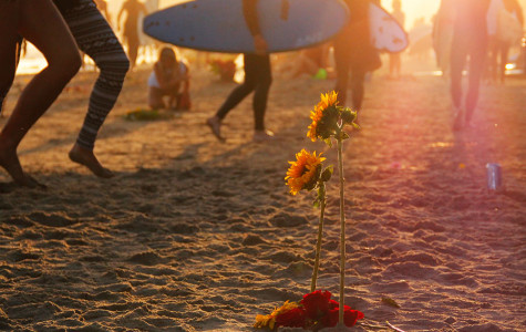 Sunflowers stand in the sand on Depressions Beach in Isla Vista, Calif. on May 28, 2014 during the Memorial Paddle Out dedicated to the six May 23 murder victims.