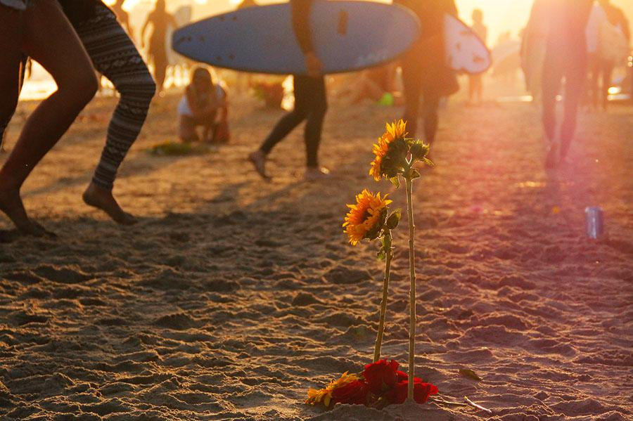 Sunflowers+stand+in+the+sand+on+Depressions+Beach+in+Isla+Vista%2C+Calif.+on+May+28%2C+2014+during+the+Memorial+Paddle+Out+dedicated+to+the+six+May+23+murder+victims.