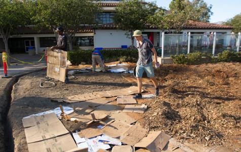 Environmental science major Jackson Hayes spreads mulch on Sunday afternoon, Nov. 8, in front of the West Campus Snack Shack at City College. The cardboard and mulch are reclaimed recycled materials from campus.