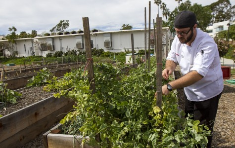 SBCC culinary students sprout a homegrown community