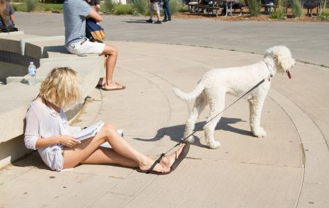 Rules prohibit animals off-leash and inside campus buildings