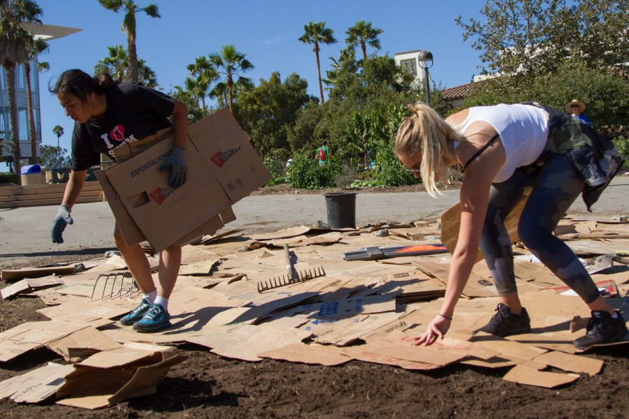 Gaby Espiritu and Maria Malmstroem setting down cardboard Friday, Oct. 20, on West Campus. The cardboard makes a barrier so that the invasive grasses cannot grow back and the mulch that will be added on top will help weigh it down to suffocate the invasive Kukuya grass.