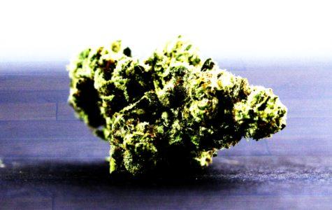Examining SBCC's marijuana policy post-legalization