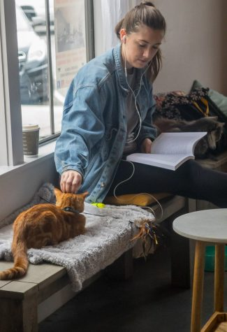 Ryan Stibur, UCSB Student, takes a break from studying on Monday, March 13 at The Cat Therapy Cafe in Santa Barbara to play with her new furry friend. Cat Therapy offer students a co-study place with rescued cats.