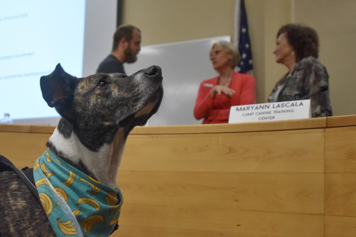 Jessie, a dog of Santa Barbara, joins panelists and students for questions after the City College Career Center hosted the event