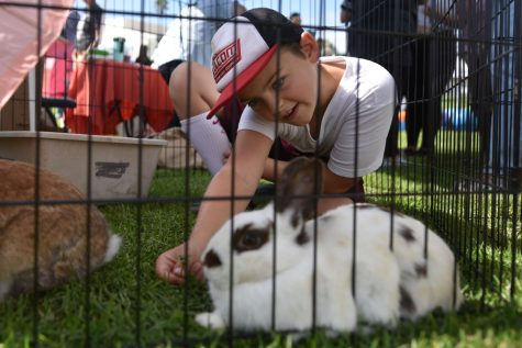 Animals come to SBCC for Wags n' Whiskers adoption festival