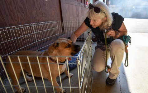 Santa Barbara no-kill shelter holds 'Wine for Wags' event