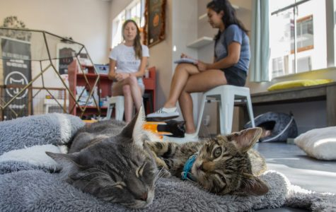 Cat Therapy offers deal for students to study with cats