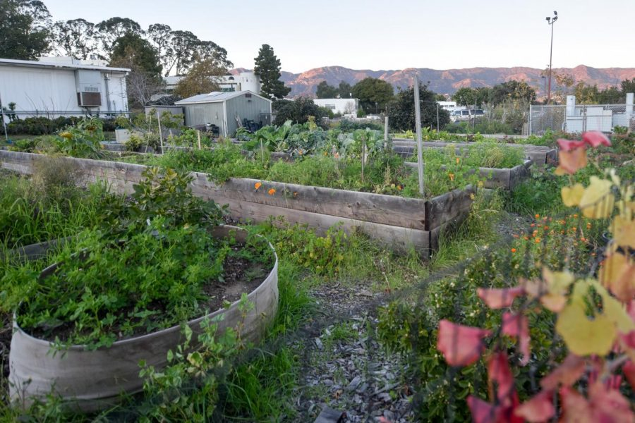 Rows of plants, vegetables, and flowers grow in The Seven Layer Garden on Monday Feb. 11, at City College in Santa Barbara, Calif.