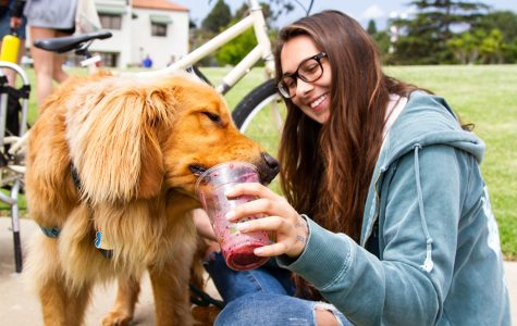 Natalie Rake's golden retriever Barnabas drinks the smoothie she made by pedaling on a bike provided by Bici Centro during the celebration of Earth Day on Thursday, April 25, 2019, at City College's West Campus Lawn in Santa Barbara, Calif.