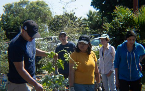 Small scale food production class teaches sustainable gardening