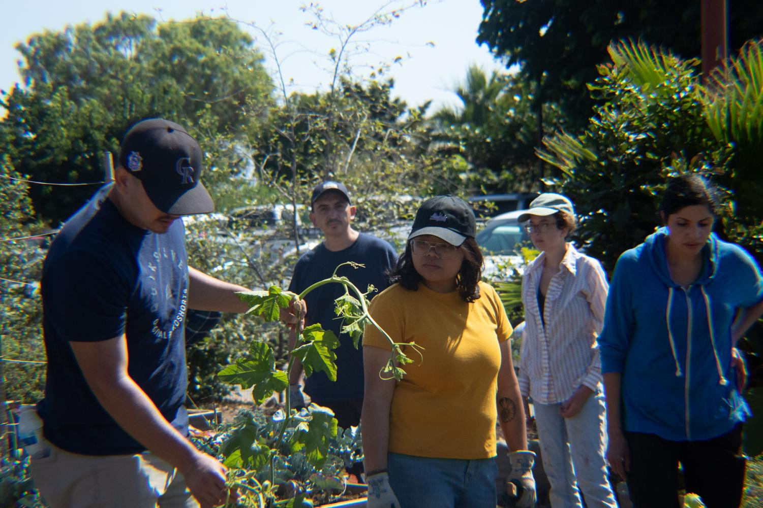 Students of Don Hartley's Small Scale Food Production class gather in the East Campus garden to do some planting on Sept. 17, 2019, at City College in Santa Barbara, Calif.
