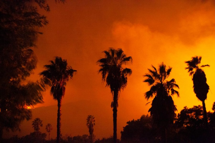 Palm trees blow in the wind during the Cave Fire on Monday, Nov. 25, 2019, in Santa Barbara, Calif. Wind gusts of up to 50 miles per hour helped drive the fire towards residential areas.