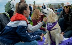 Wag Well, Be Well — Therapy dogs visit SBCC, help students de-stress