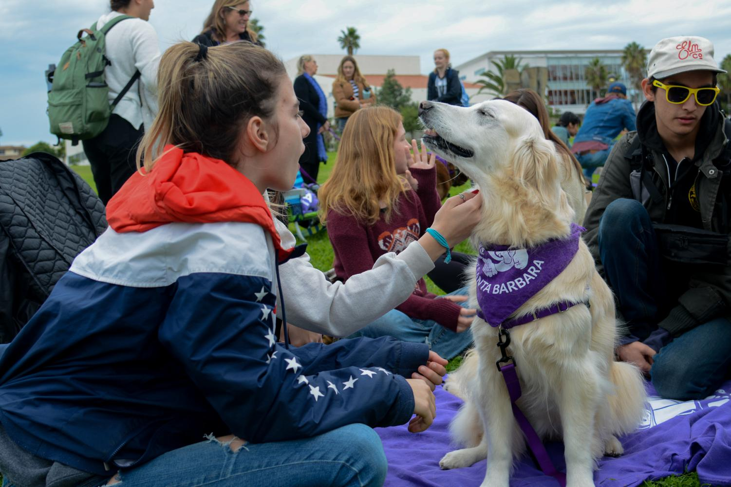 City College students pet and interact with therapy dog Lily-Rose on the West Campus lawn during the Wag Well Be Well Dog Therapy Event on Tuesday, Dec. 3, 2019, at City College in Santa Barbara, Calif. Lily-Rose is nine years old and has been working as a therapy dog for seven years.