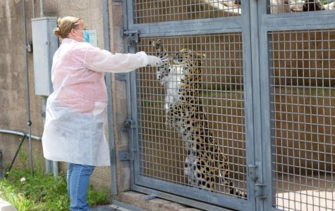 The Santa Barbara Zoo is taking extra precaution against COVID-19 reaching big cat species susceptible to the virus.