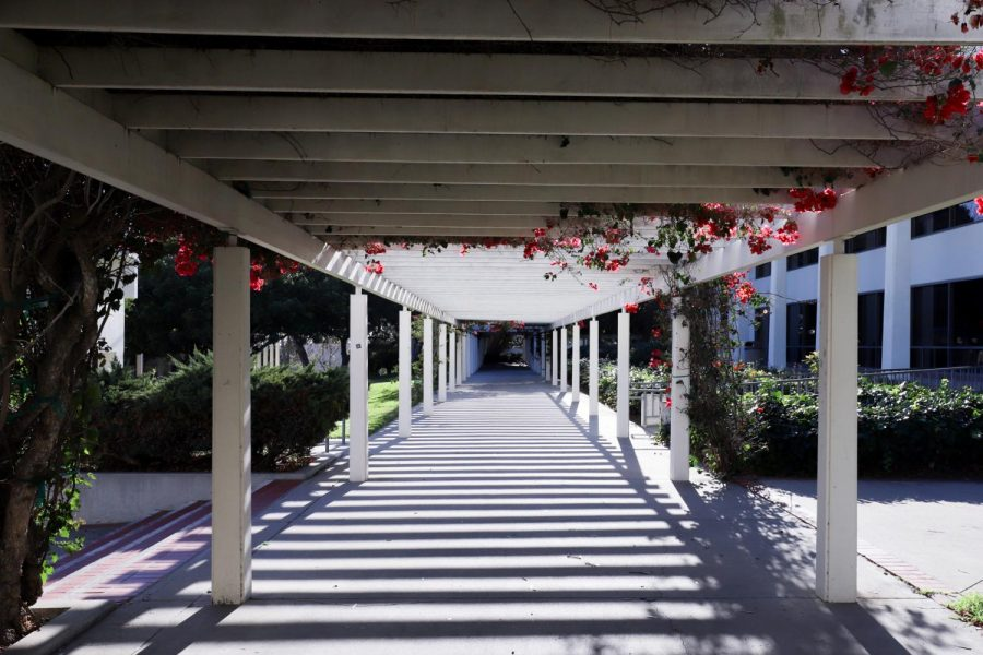 In response to a consistent drop in out-of-state enrollment, the City College outreach team is focusing on reaching local high school students who may be considering City College during the challenges of the pandemic. File photo of a walking path on City College's main campus from Jan. 2021.