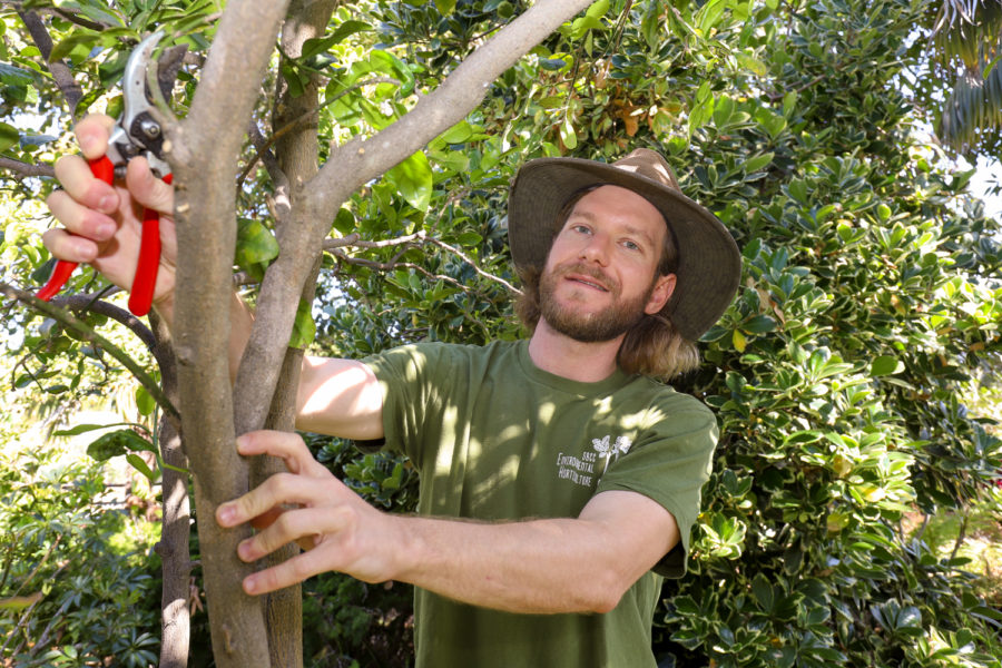 Lewis Daniel trims away unhelpful branches from one of the saplings on April 27, at the Landscape Gardens on East Campus at City College in Santa Barbara, Calif. Daniel graduated from UCSB in 2011 with a film degree and after working in the industry with 70 hour work weeks with no breaks he decided to choose a new path at City College hoping to leave with landscaping license or arborist certification.