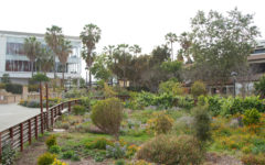 Navigation to Story: SBCC's campus gardens thriving another year after federal grant