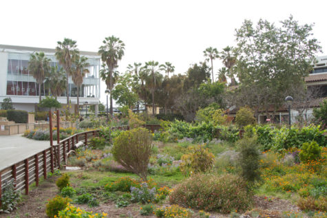 The SBCC Permaculture Garden sits amid a mostly empty campus on Thursday, April 22, 2021, at Santa Barbara City College in Santa Barbara, Calif. A $100,000 grant from the Environmental Protection Agency provided funding to sustain the garden and to launch the Ecological and Edible Garden Project with local nonprofit Explore Ecology.
